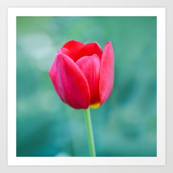 Pink Tulip, Spring Garden Flower Art Print