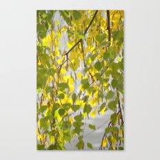 Birch Leaves 7165 Canvas Print