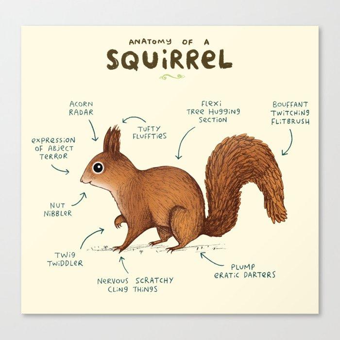 Anatomy of a Squirrel Leinwanddruck