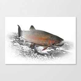 Migrating Steelhead Trout Canvas Print