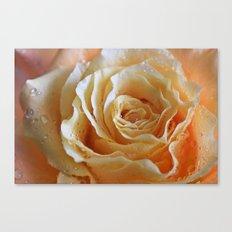 Honey Peach Rose Canvas Print