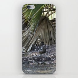 Water Birds iPhone Skin