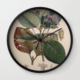 Illustration of the Nueva Quinologia of Pavon Wall Clock