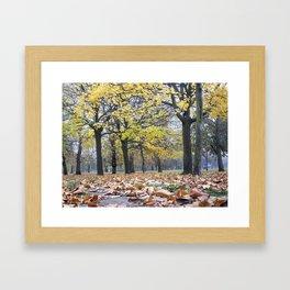 Group of Trees Framed Art Print