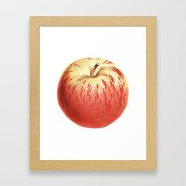 Apple Illustration Drawing Framed Art Print
