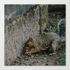 City Squirrel Canvas Print