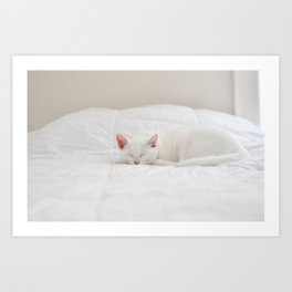 Cat naps Art Print