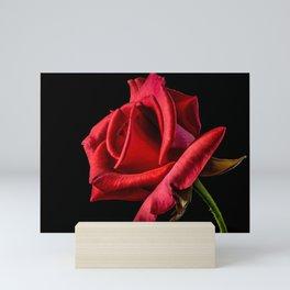 Red Rose Bloom Mini Art Print