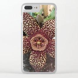 Starfish Plant - Stapelia Variegata Clear iPhone Case