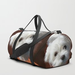 Cute Maltese asking for a treat Duffle Bag