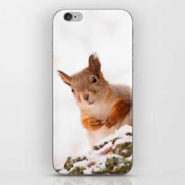 Squirrel in first snow #decor #buyart #society6 iPhone Skin