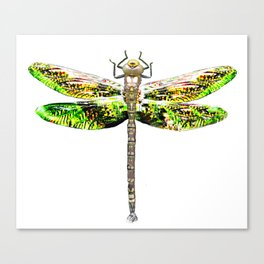 Dragonfly illustrated flying insect Canvas Print