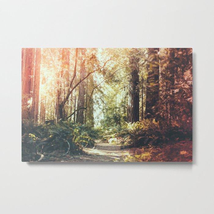 Beautiful California Redwoods Metal Print