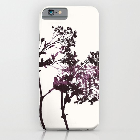 sugar maple 1 iPhone & iPod Case