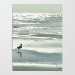 BIRDIE WALKING ON THE BEACH AT SUNSET Poster