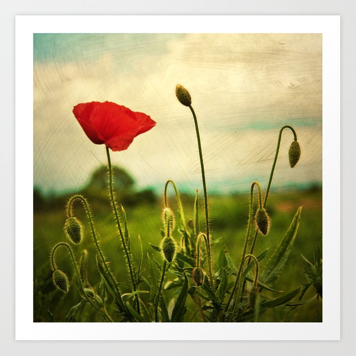 Red Poppy Art Print By Morningvioleta