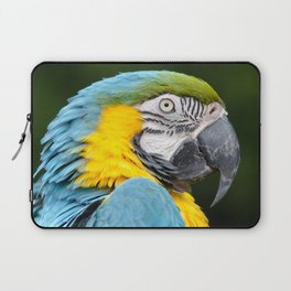 Blue and gold macaw Laptop Sleeve