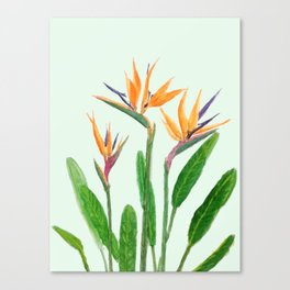 bird of paradise flower painting Canvas Print