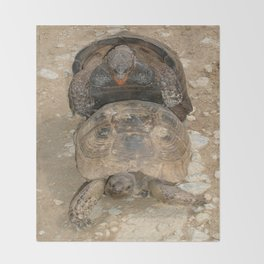 Humorous Mating Tortoises Throw Blanket