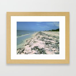 Sanibel - Seaweed, Shells, Sky & Surf Framed Art Print