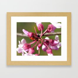 Flowering Redbud with Ladybug Framed Art Print