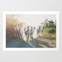 Camargue Horses XIII Art Print