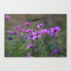 Purple Windflowers Canvas Print
