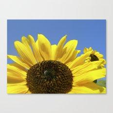 summer sunflower IV Canvas Print