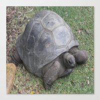 tortoise Canvas Prints featuring tortoise by shannon's art space
