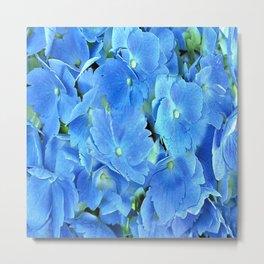 Elegant Blue Hydrangea Metal Print