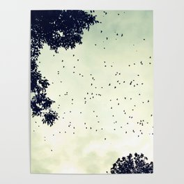 Flock of birds at sunset Poster