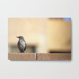 Golden-Eyed Mockingbird Metal Print