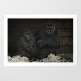 Gorilla Mother Has Her Cheeky Son By The Scruff Of His Neck Art Print