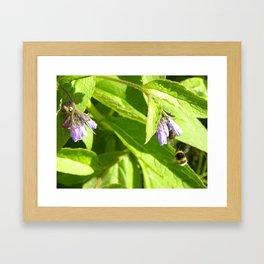Flight of the Bumblebee  Framed Art Print