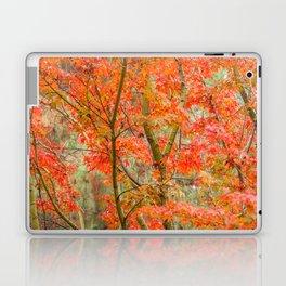 Japanese Maple in autumn Laptop & iPad Skin