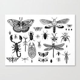 Bug Board Canvas Print