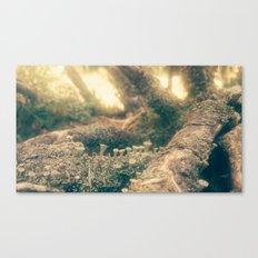 minishrooms Canvas Print