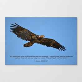 Soaring High!  -  Immature Canvas Print