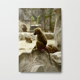 Baboon Contemplating Metal Print