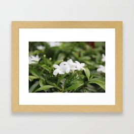 Water Jasmine Framed Art Print