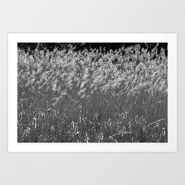 Reed flower fluttering in the wind Art Print