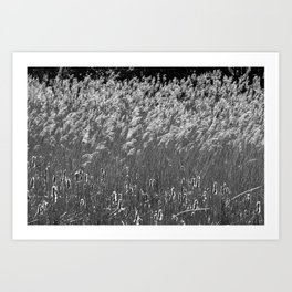 Reed flower fluttering in the wind Art Print