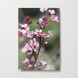 Red Plum Blossoms Metal Print