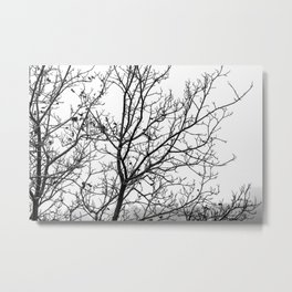 Black and white branches on a foggy morning Metal Print