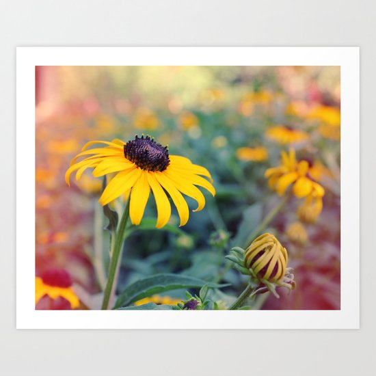 Flower series 04 Art Print