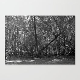 A Forest In The Park Canvas Print