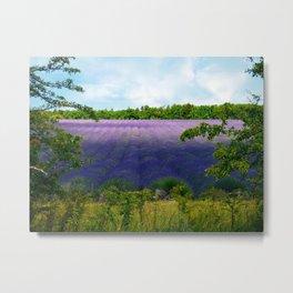 Summertime Lavender Metal Print