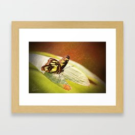 Butterfly - Ready for takeoff Framed Art Print