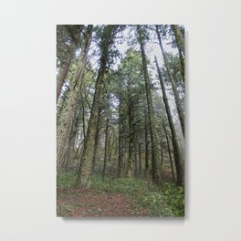 The Forest At Dog Mountain Metal Print