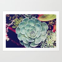 succulent Art Prints featuring Succulent by Holli Dunn Photography